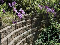 Top course of retaining wall planted